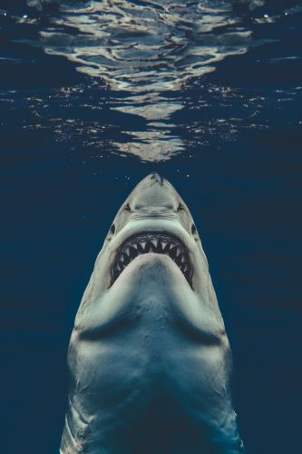 Photographer Shot the Perfect Jaws' Poster in Real Life