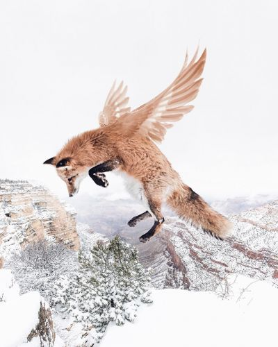 Luisa Azevedo and Her Fairy Animal Photo Manipulations