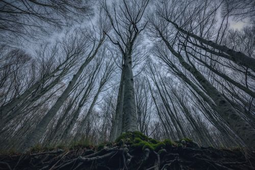 The Beauty of the Casentino Forests