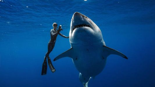 Divers Meet one of the Geatest White Shark ever Filmed