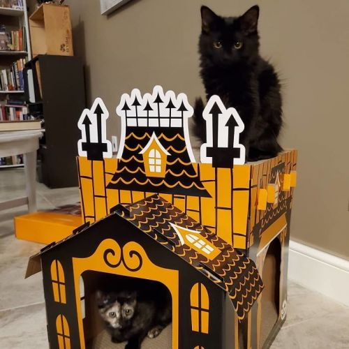 A Halloween House for Cats