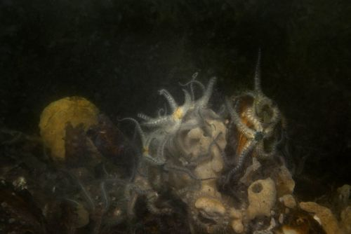 Mysterious Still Life Submerged by Elspeth Diederix
