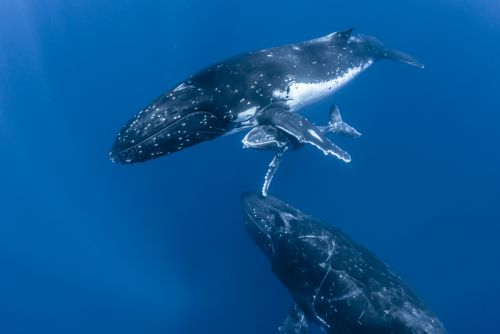 Fascinating Journey in the Blue World with Whales