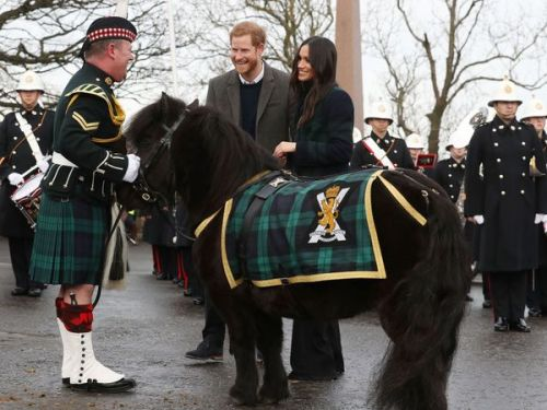 Le moment où le prince Harry a failli se faire mordre. par un poney !